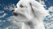 Stock Video Footage of Pet Cloud Heaven Time Lapse
