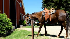 Horse by a barn on a ranch Stock Footage