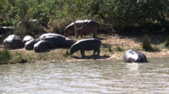 Hippos laying Stock Footage