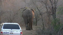 Elephant walking on the road Stock Footage