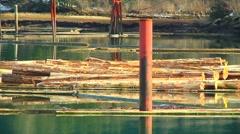 Floating Logs in ocean Harbour between Steel Pilings (slow pan left) - stock footage
