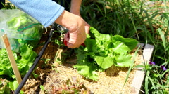 Gardening vegetables on a summer day Stock Footage