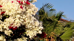 flowers and palm on the wind - stock footage
