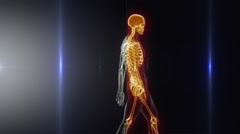 Good posture concept - x-ray spine scan Stock Footage