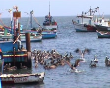 Port with pelicans Stock Footage