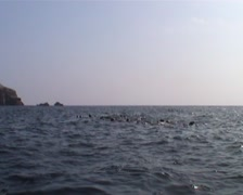 Ballestas islands, seals in the sea Stock Footage