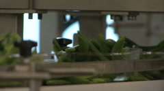 Machine fills green beans in plastic cup Stock Footage