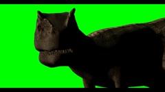 AllosaurusG Stock Footage