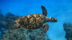 Turtle swim ocean marine life coral reef Stock Footage