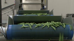Two lines beans falling Stock Footage