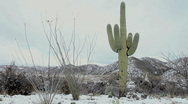 Snow Dusts Winter Desert Landscape Stock Footage