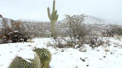 Snowfall Desert Landscape Stock Footage