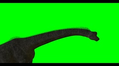Brachiosaurus on green screen background Stock Footage