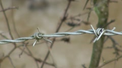 Barbed Wire Nature Stock Footage