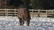 Horse scrapes at snow. Stock Footage