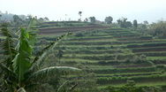 Beautiful Terraced Rice Fields, Paddy Field, Palm Trees, Bali, Indonesia Stock Footage