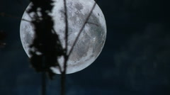 Moon through the trees Stock Footage