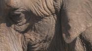 Elephant Clip 3 Stock Footage