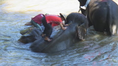 Thailand: Mahouts wash elephants in river Stock Footage