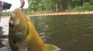 Panfish Fishing Shellcracker Stock Footage