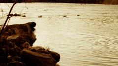 Rivers Edge Dusk Stock Footage