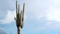 Snow Slides Off Saguaro Arm Stock Footage