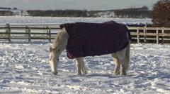 Horse eats snow. Stock Footage