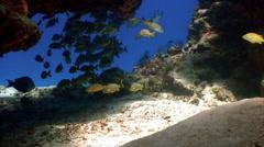 School of fish underwater cavern Stock Footage