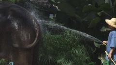 Thailand: Elephant receives hose bath Stock Footage