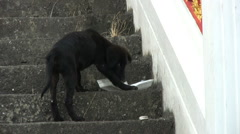 Hungry Stray Puppy - stock footage