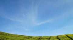blue sky and green tea field - stock footage