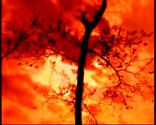 Tree at sunset Stock Footage