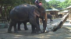 Thailand: Elephant pair shows teamwork Stock Footage
