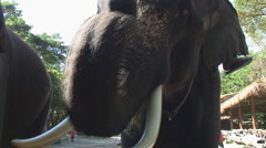 Thailand: Elephant receives tip Stock Footage