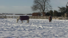 Two horses graze in snow covered paddock. Stock Footage