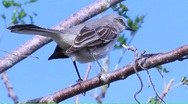 Stock Video Footage of bird in tree