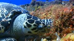 Turtle feeding ocean marine life Stock Footage