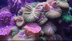 Fish and corals in the Underwater Observatory Marine Park, Eilat Stock Footage