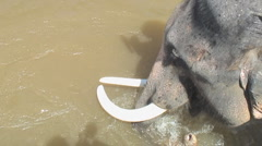 Thailand: Elephants wade across river Stock Footage