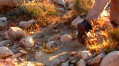 Cowboy Carrying Guitar Climbs Desert Mountain 4 Stock Footage