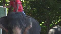 Thailand: Elephant arranges logging chain Stock Footage