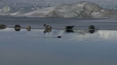 Seals lying on edge of ice flow in Iceland Stock Footage