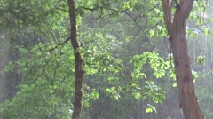 Rain in sunlit forest Stock Footage