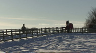 Horses stand at fences in snow. Stock Footage