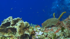 Coral Reef smooth wall drift Stock Footage