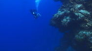 Coral Reef smooth wall drift diver Stock Footage