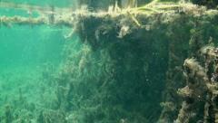 Rainbow River Underwater 1 Stock Footage