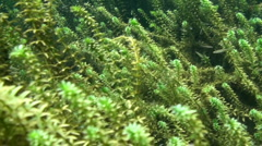 Rainbow River Underwater 7 Stock Footage