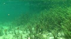 Rainbow River Underwater 10 Stock Footage