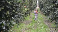 Girl in orange grove Stock Footage